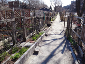 City receives grant to fund urban agriculture