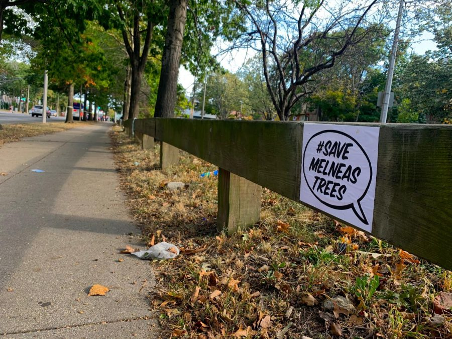 Many signs are posted along Melnea Cass Boulevard to spread awareness about the trees.