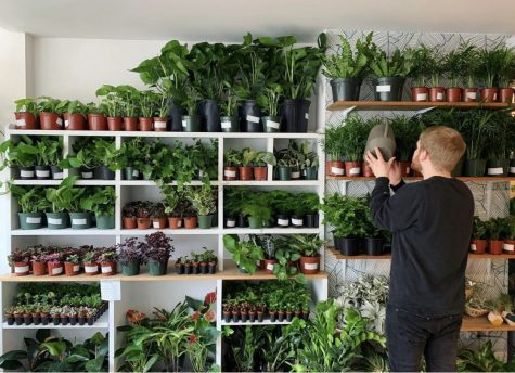 Niche is a plant store with locations in South End and Davis Square.