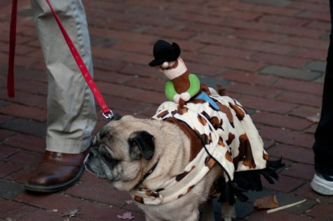 In Salem, even the dogs would take part in Halloween festivities. Now, the city is gearing up for the spooky holidays return.
